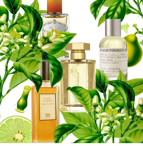 Fragrance Orange Blossom Perfume: Perfume Shrine: Perfumery Materials: Neroli, Petit Grain, Orange Blossom, Bigarade