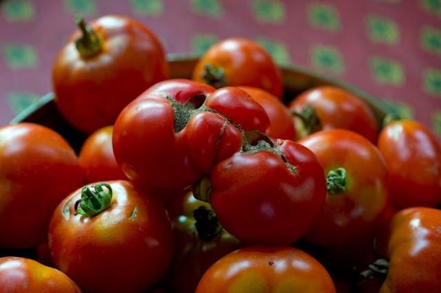Nova Scotia; Stil Life; Tomatoes