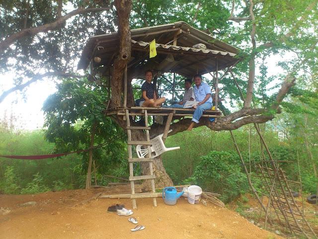 Таксисты в Таиланде несут вахту на дереве