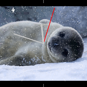 watchface seal