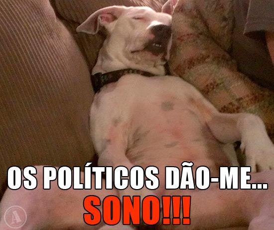 Cão a dormir no sofá – Os Políticos dão-me… Sono!!!