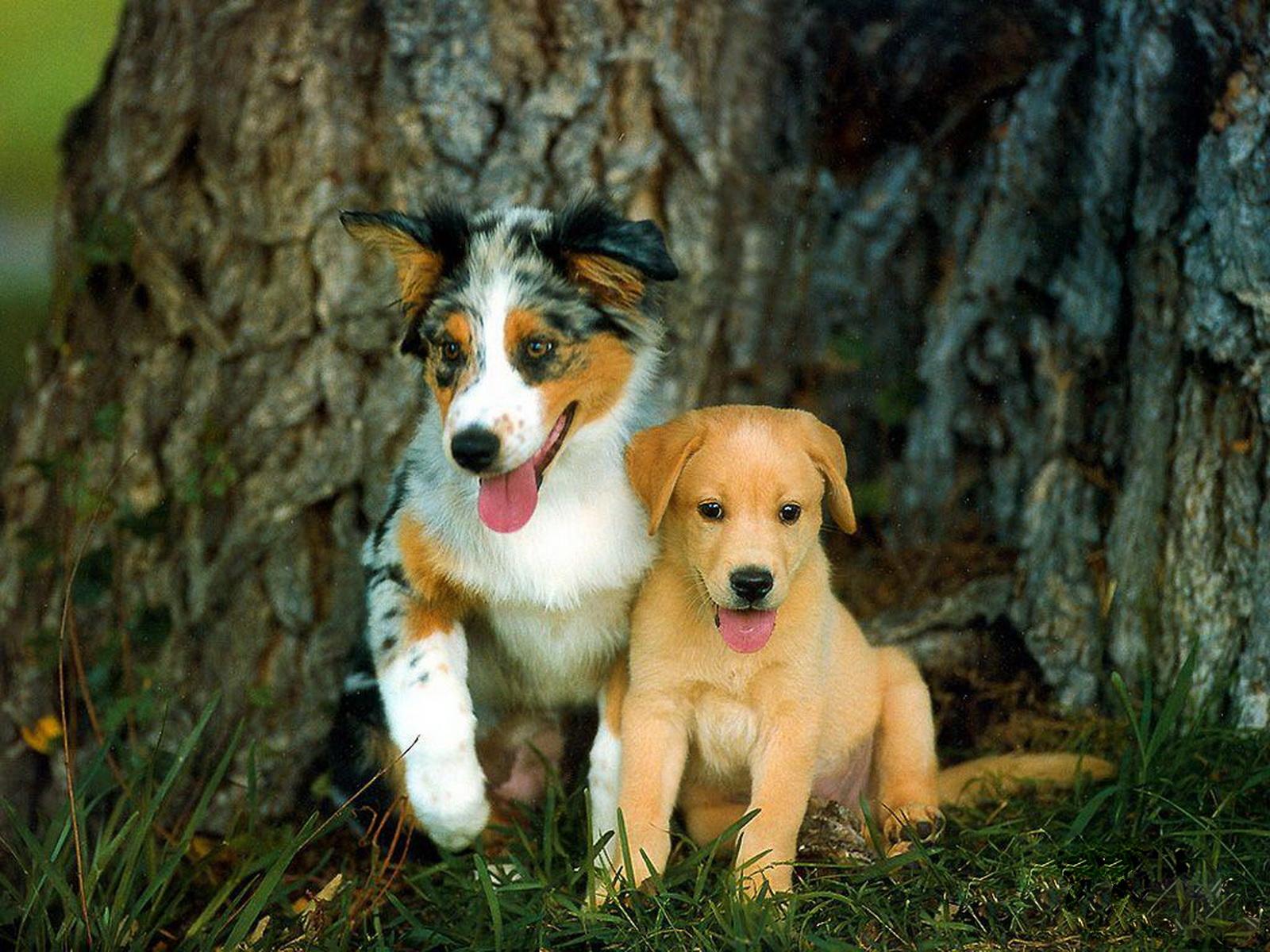 http://3.bp.blogspot.com/-yhP3bg5diFI/Tyw5Man6veI/AAAAAAAAAz8/vei34UUvVNs/s1600/3-Cute+Dog+1600x1200.jpg