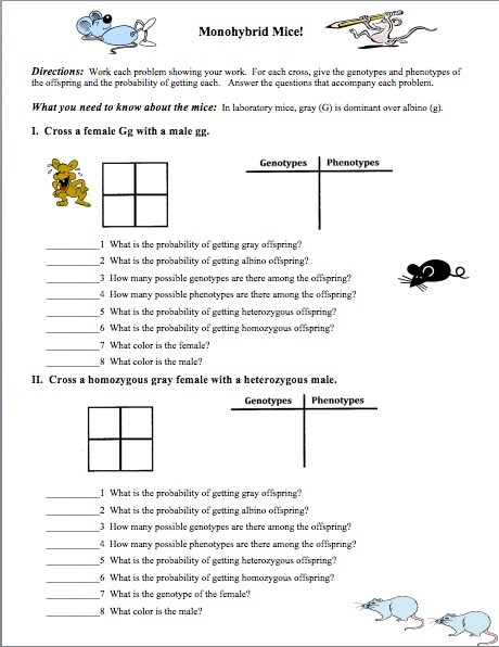 monohybrid cross worksheet answer key - Termolak
