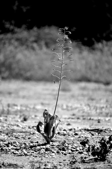 Lone plant among rocky ground