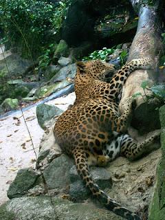 ملف كامل عن اجمل واروع الصور للحيوانات  المفترسة   حيوانات الغابة  524328235_b669c94dbe