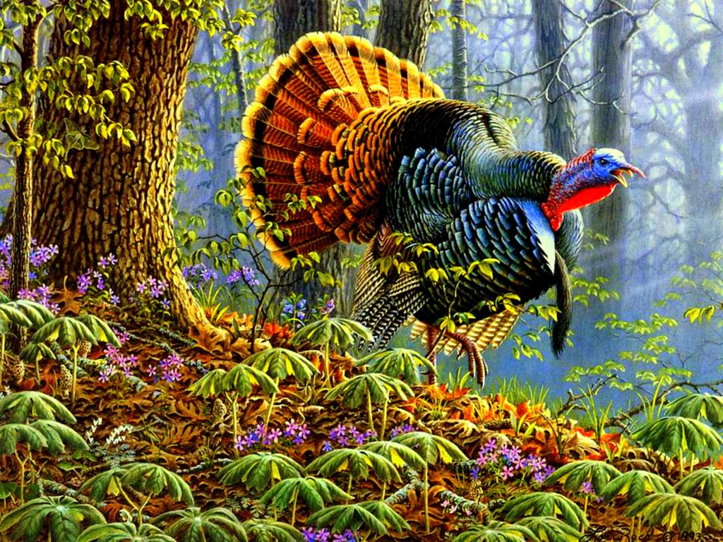 animal wallpapers wild turkey wallpaper pictures