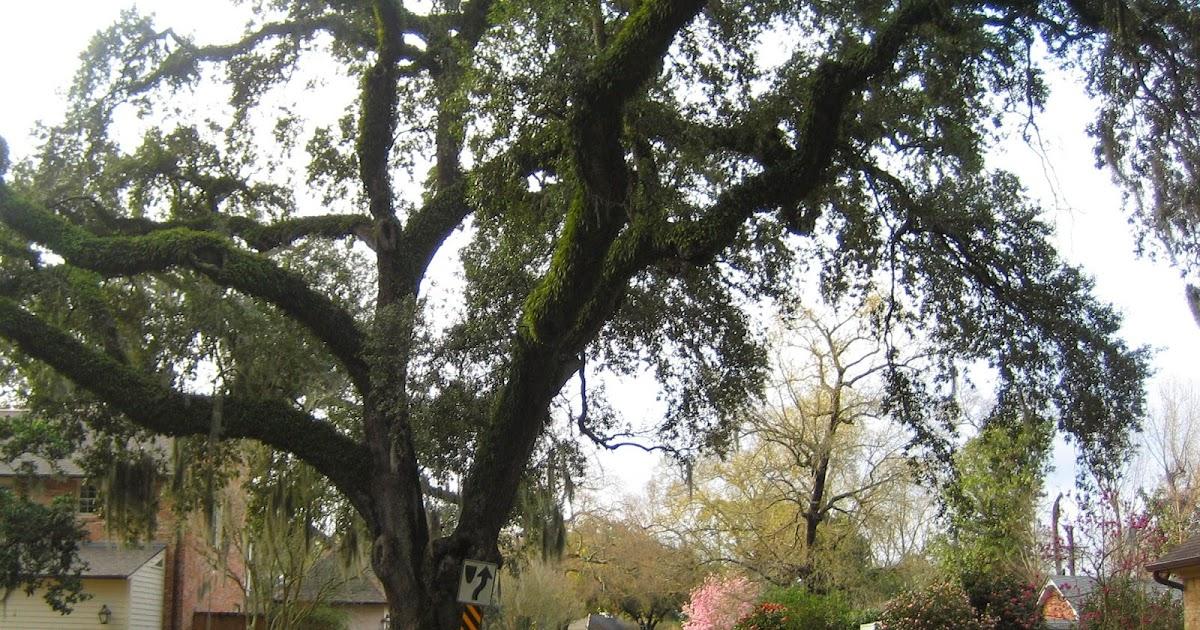 River Ranch Lafayette La Homes For Rent