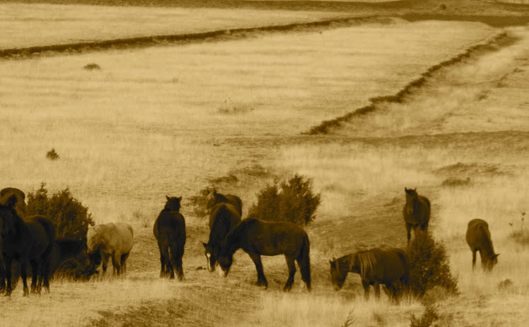 Wild horses along the wagon ruts of the old Santa Fe Trail.