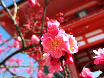 ume and red temple
