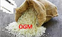 riso ogm biologico
