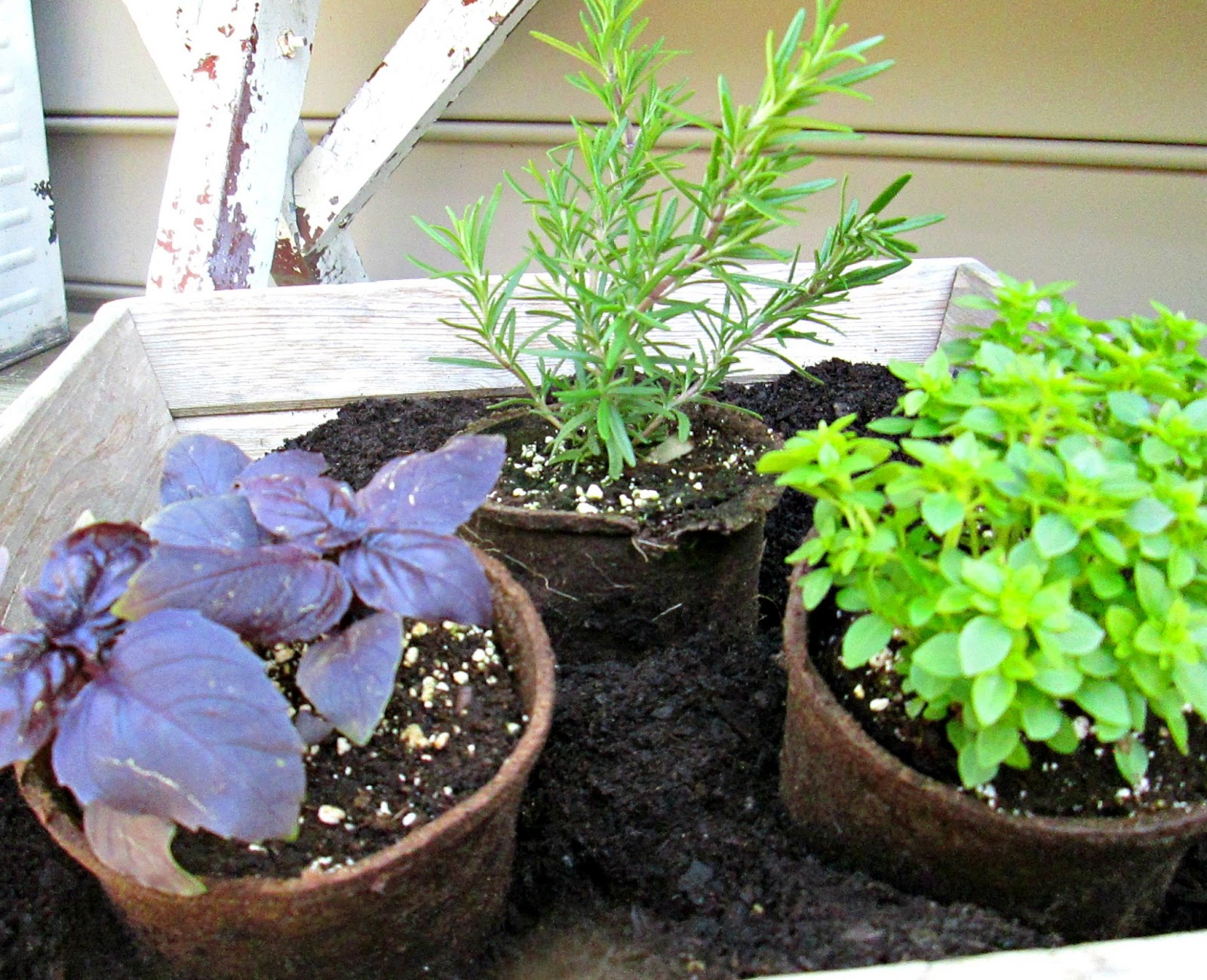 Herb Planters Classy Of Pretty Herb Planters Pictures