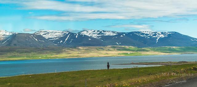kuc islandzki , Islandia
