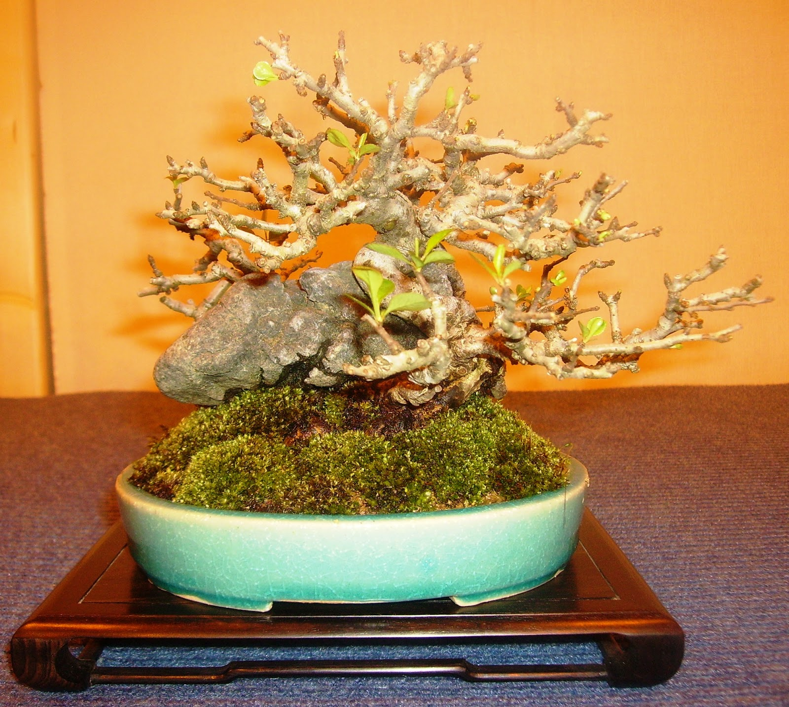 Bespoke Bonsai Stands February 2013