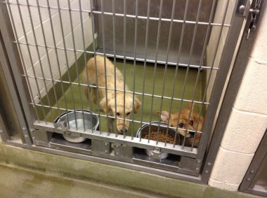 Elk Grove Will Host Animal Shelter Workshop Tonight