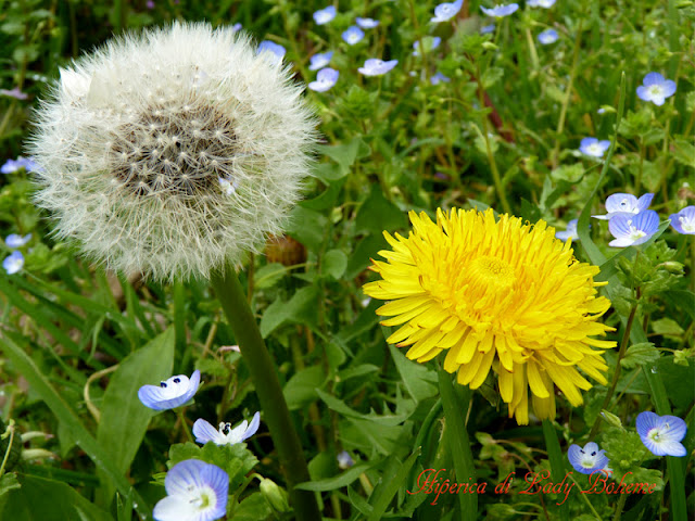 hiperica_lady_boheme_blog_di_cucina_ricette_gustose_facili_veloci_fiori_di_primavera