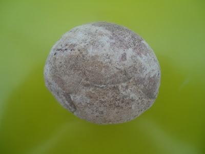 Authentic Prehistoric Fossilized Dinosaur Egg