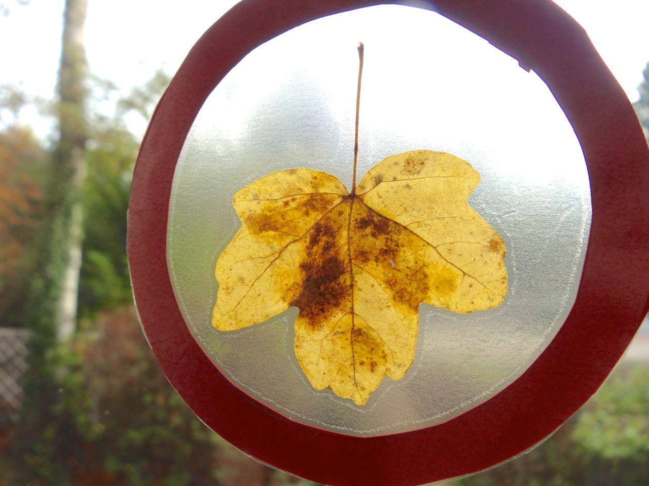 Frische Brise: Herbstliche Fensterbilder