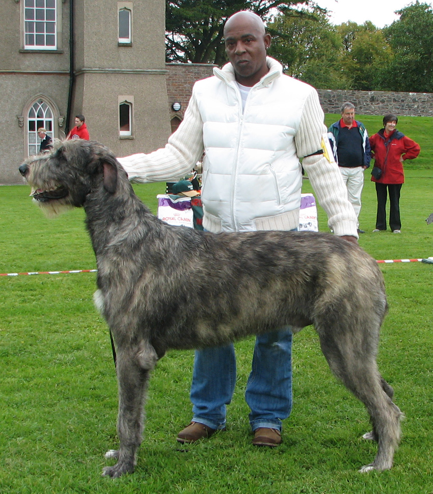 NAVER まとめ世界最大の犬種「アイリッシュ・ウルフハウンド」画像集