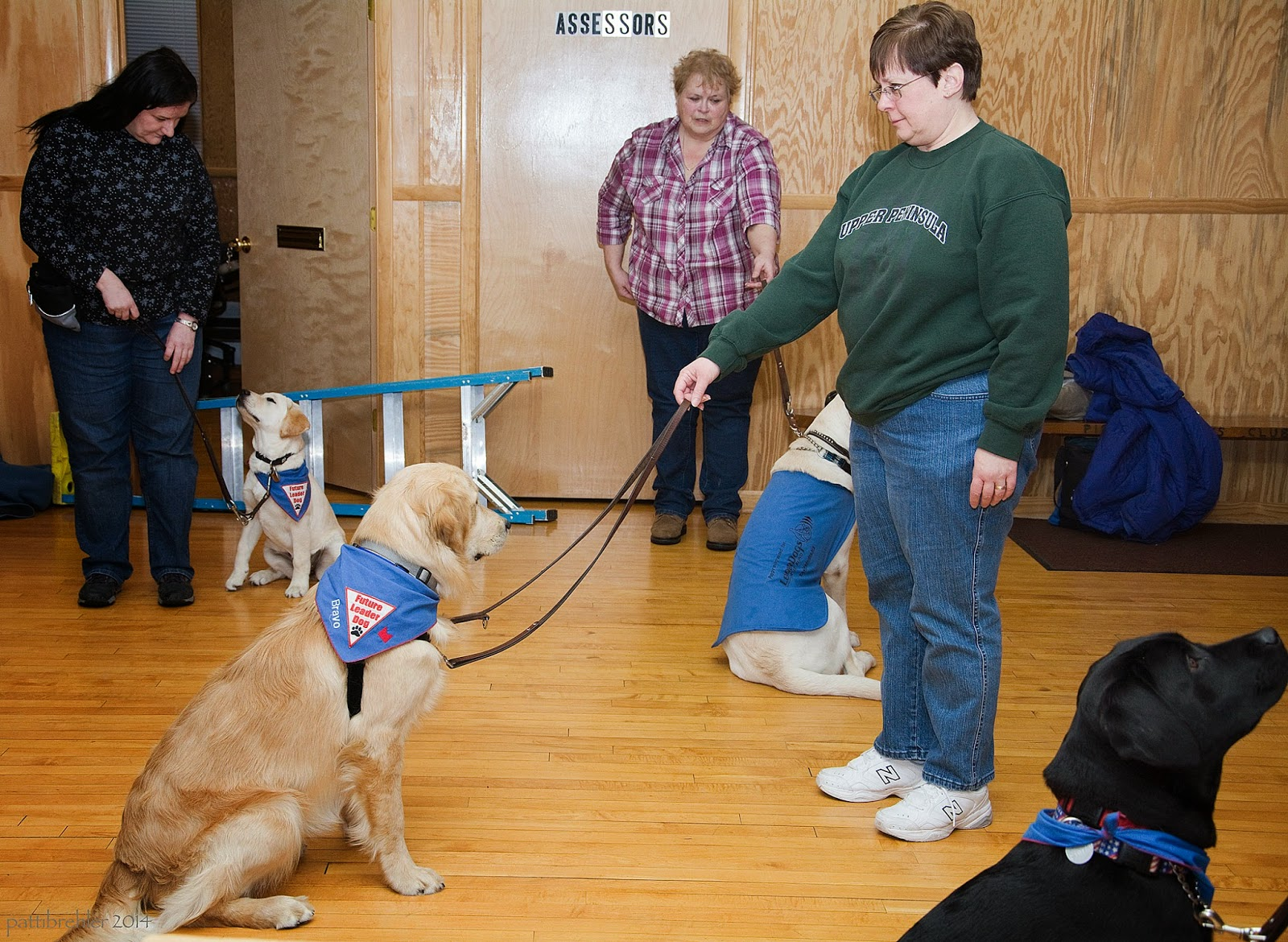 Three women are standing and holding the leashes of three yellow labs. The woman on the left is dressed in a black with white markings on her shirt and blue jeans - a small yellow lab is sitting on her left side wearing a blue Future Leader Dog bandana, the pup is looking up at her and she is looking down at the pup. The woman in the middle is close to the far wall and is wearing a red and white plaid shirt and blue jeans, she has short curly hair. The yellow lab is sitting in front of her facing her and is wearing a blue Future Leader Dog vest. The woman on the right is wearing a green sweatshirt and blue jeans, she has short brown hair. The yellow lab she has is sitting a few feet in front of her facing her and is wearing a Future Leader Dog bandana. There is a black lab in the corner of the picture on the right side, looking up at someone out of view. The floor is wood, as are the walls. There is a blue and sliver ladder lying on its side behind the woman dressed in black on the left. There is a wood bench seat on the right side against the far wall with a blue jacket drapped on it.
