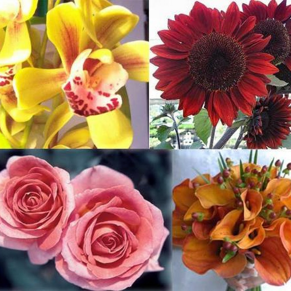 Different Images Of Flowers