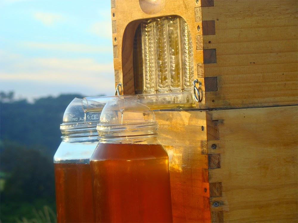 inovasi-baru-proses-ekstrasi-sari-madu-sarang-lebah-desain-ruang dan rumahku-002