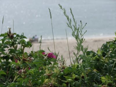 Chatham Beach View