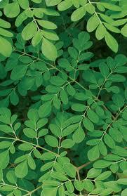 Moringa leaf , Natural supplements