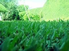 Não pise na grama!!