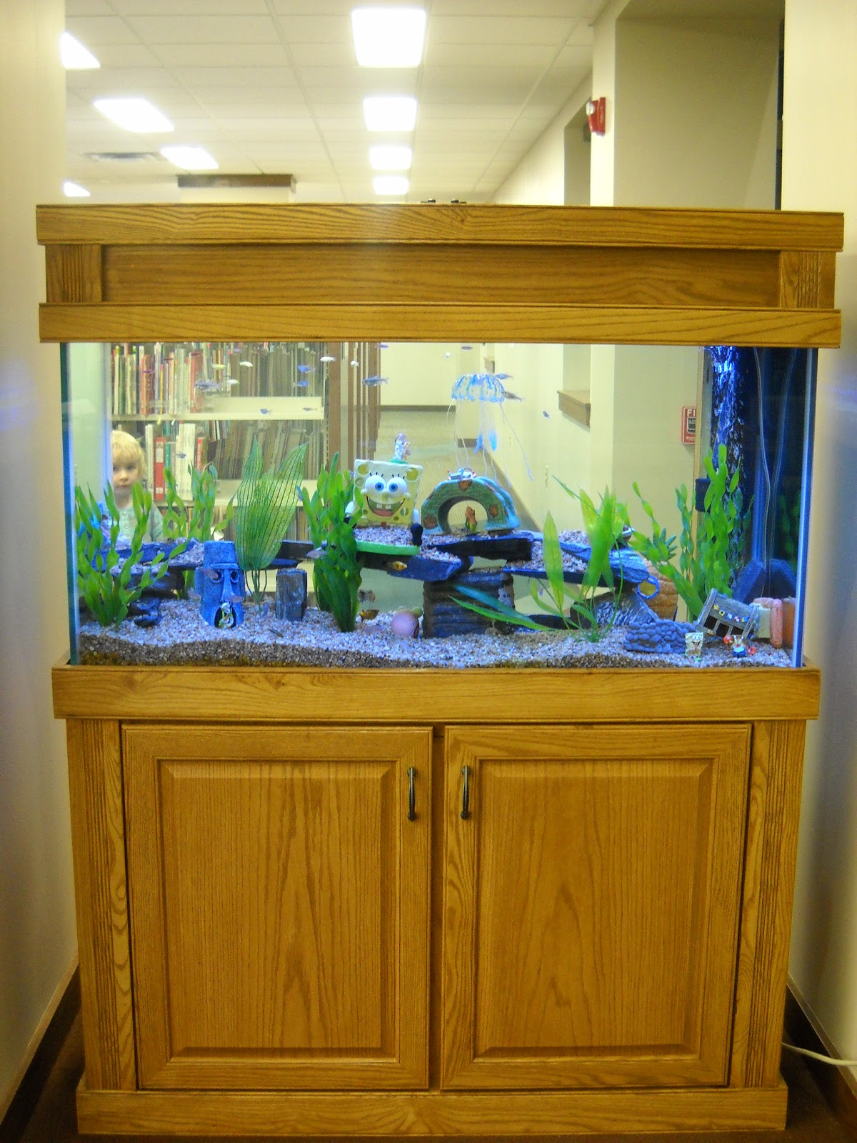 mukwonago community library blog new fish tank in the