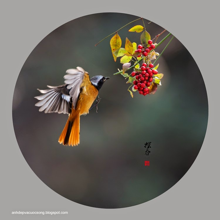 Những chú chim tung tăng ngày nắng ấm 10