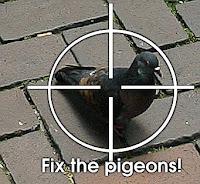Pigeon Hunt