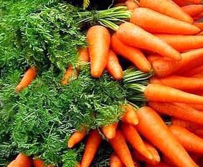 Cenoura, um rico alimento