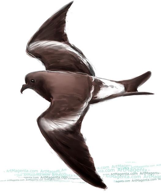 Klykstjärtad stormsvala är en fågelmålning från Artmagentas svenska galleri om fåglar