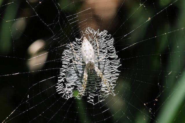 بالصور ..تصاميم مذهلة لشبكات العنكبوت