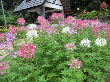 Rumpun Bunga di Bukit Fraser