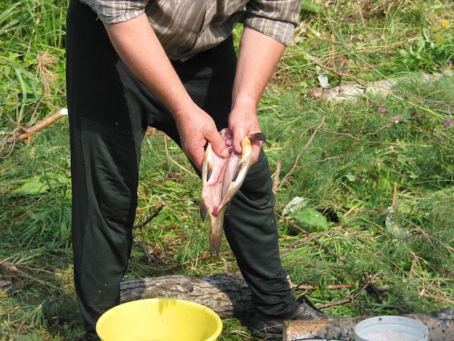 готовим рыбку