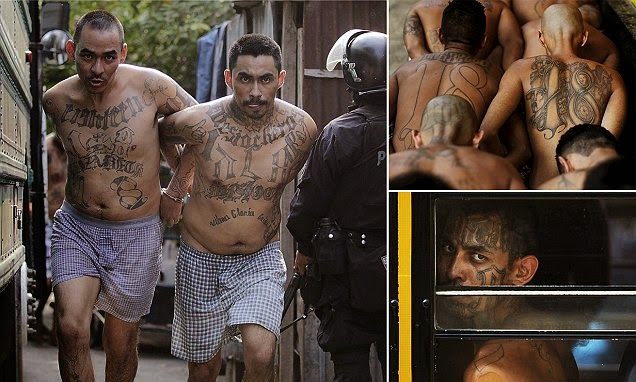 world dangerous gang ms 13 The mara salvatrucha gang, also known as ms-13, started in los angeles but has expanded throughout nearly the entire country the mara salvatrucha gang, also known as ms-13, started in los angeles.