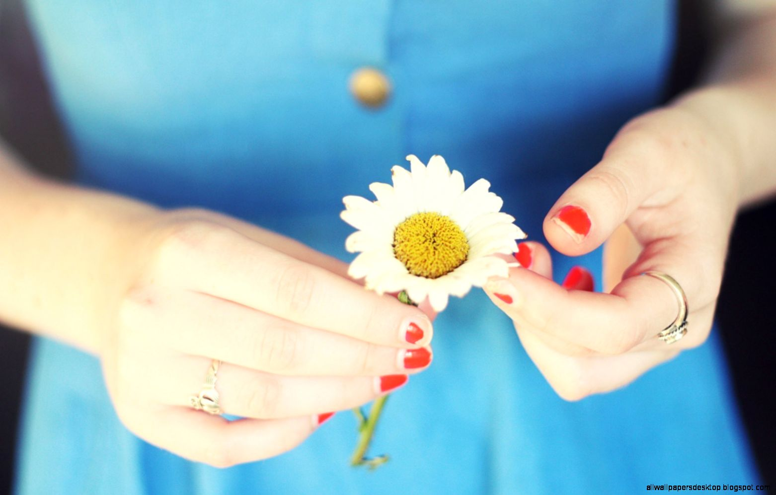 Flower Daisy Girl Mood Photo 7005630