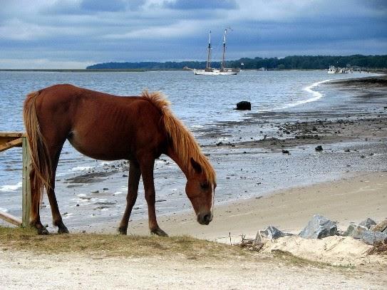Cumberland Island