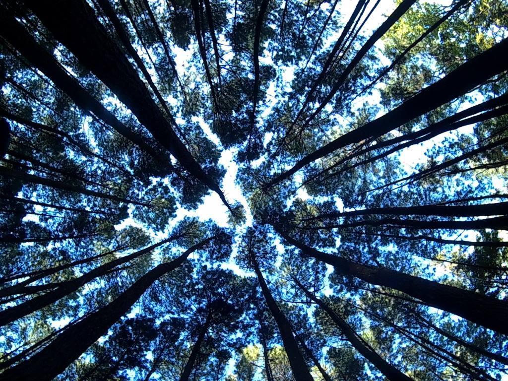 Hutan Pinus Imogriri