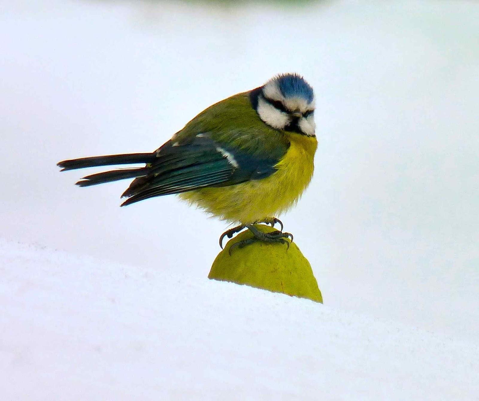 Green zen bubbles un week end pour compter les oiseaux for Jardin des oiseaux