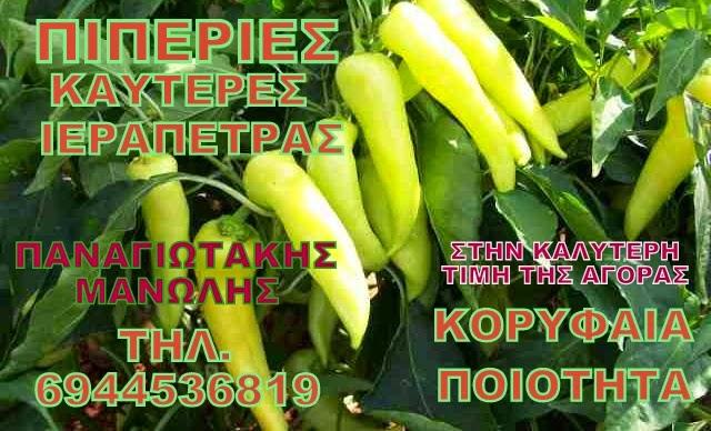 ΠΙΠΕΡΙΕΣ ΙΕΡΑΠΕΤΡΑΣ