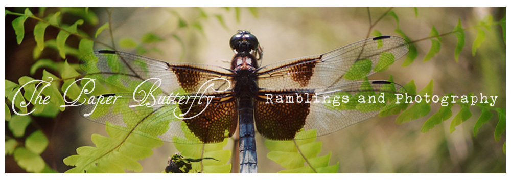 The Paper Butterfly :: Ramblings and Photography