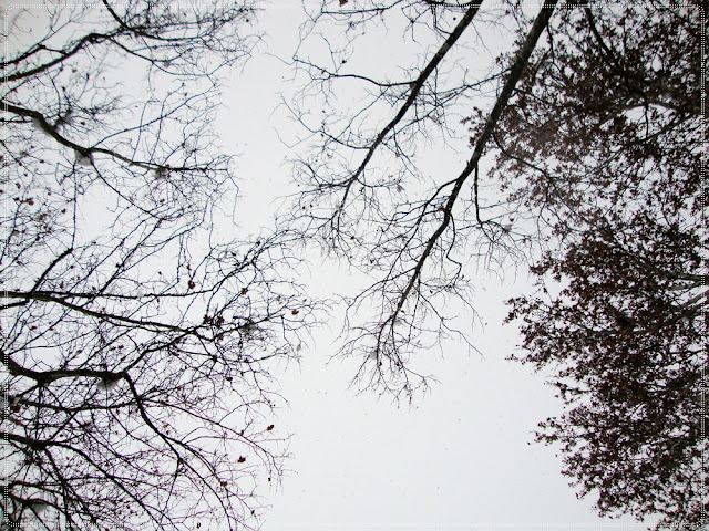 grane stabala