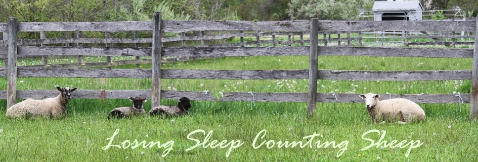 losing sleep counting sheep