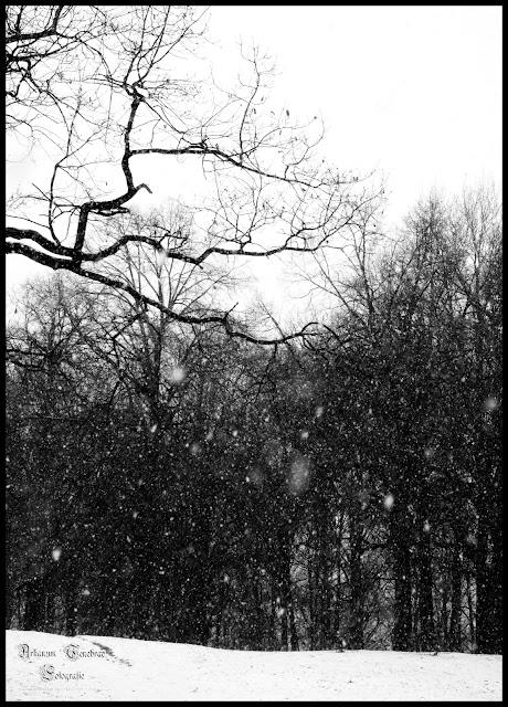 Winterlandschaft im Wald