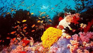Барьерный риф Австралия