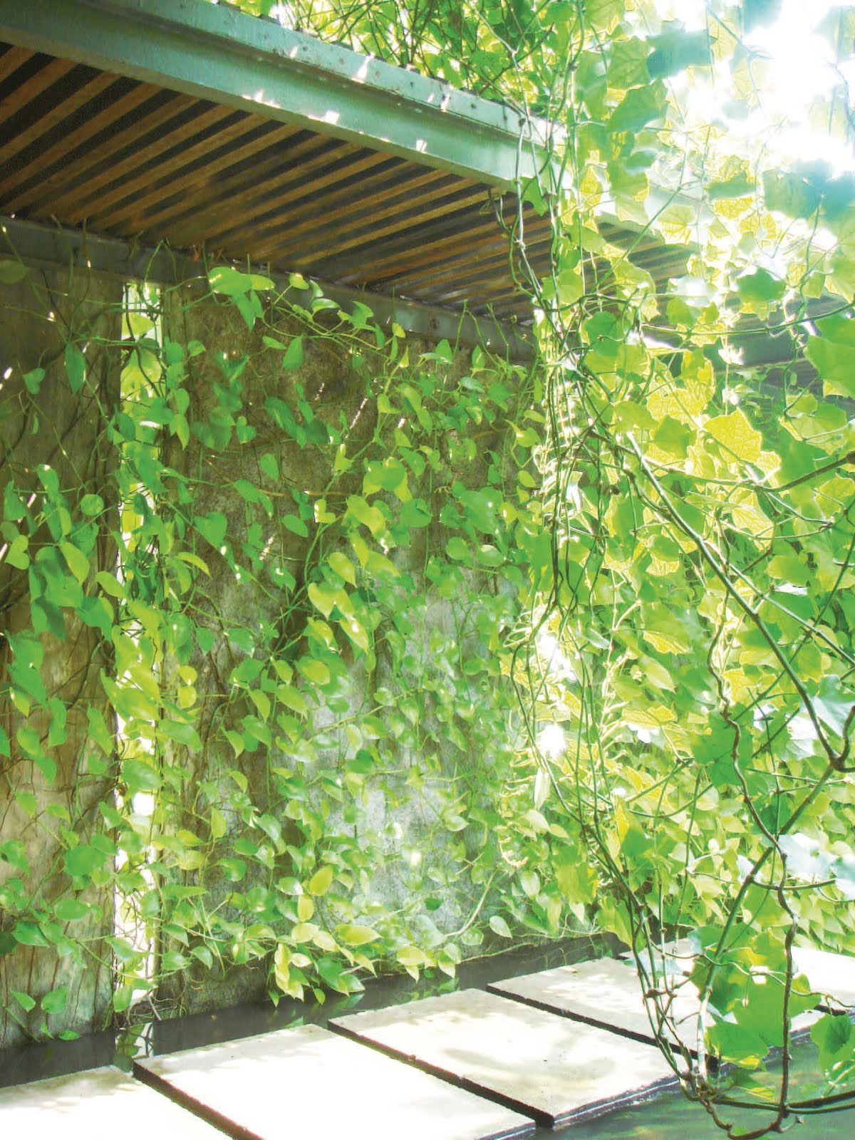 vines for the garden free design news