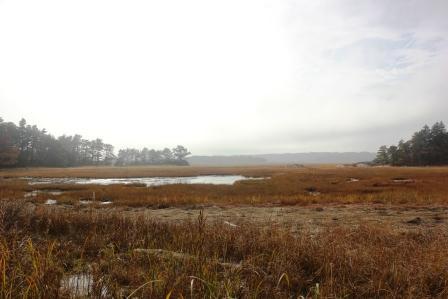Sprague River marshland