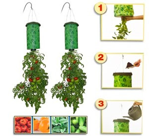 cara menanam tomat di pot terbalik nah pingin tahu cara